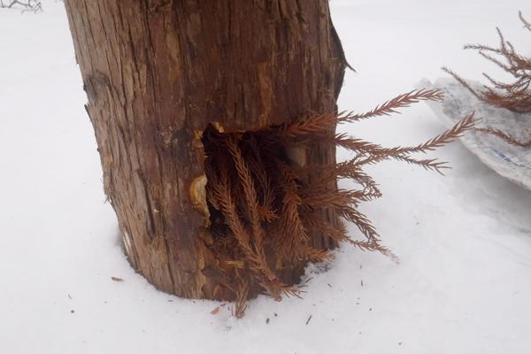 平らな場所に丸太を置いて、下の小窓に着火剤となる木の小枝を入れる。あまりたくさん詰め込みすぎると着火しにくくなるため、すき間ができるぐらいでOK。